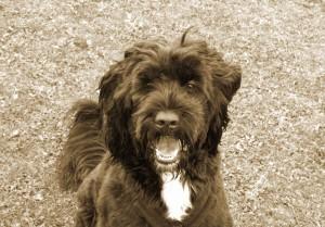 Figo the Dog